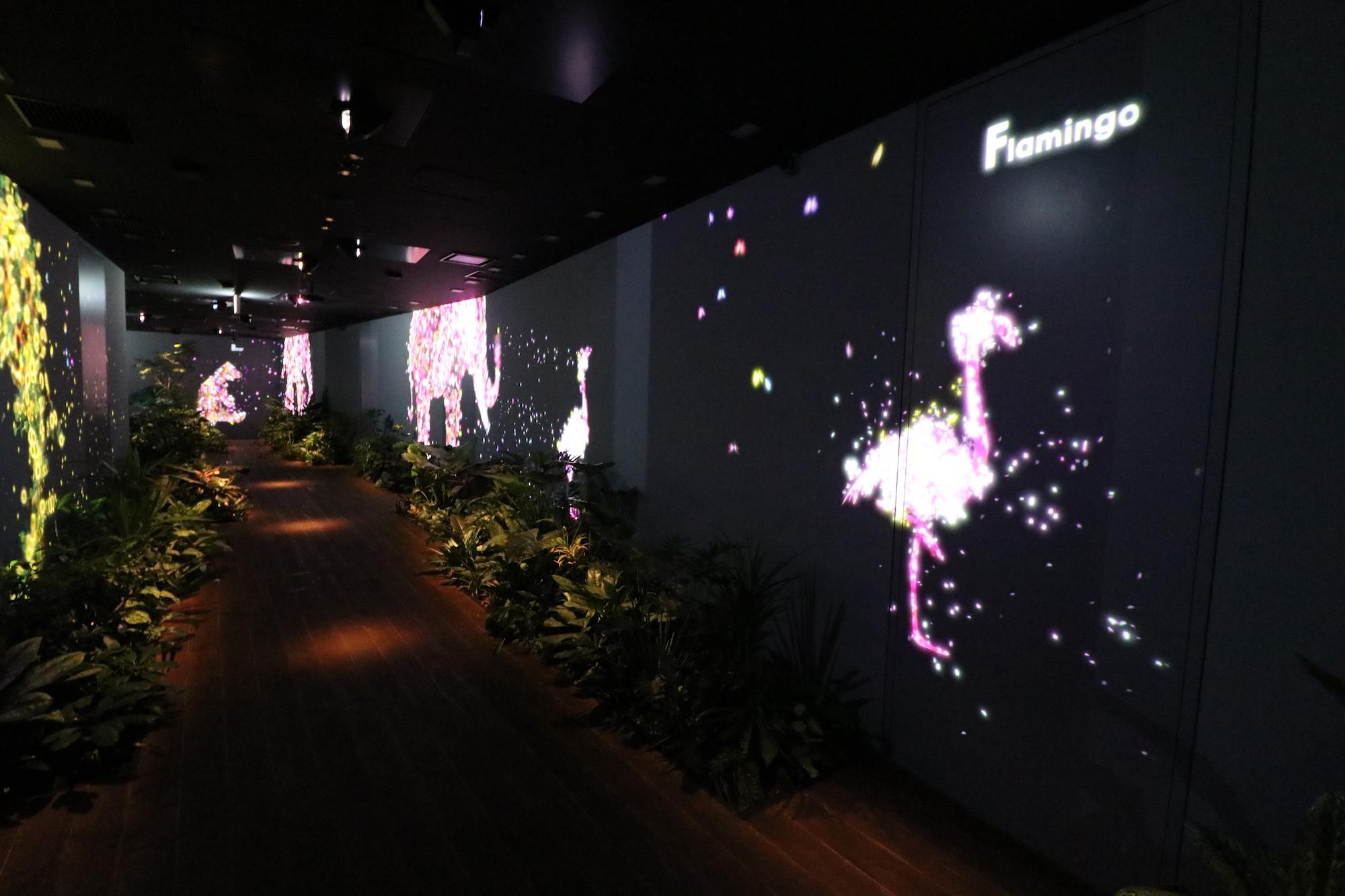 DMM の部屋「フラミンゴ」